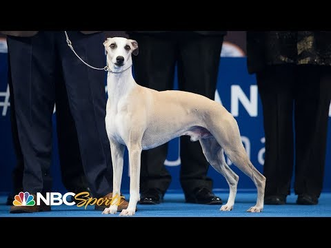 National Dog Show 2018: Best in Show (Full Judging) | NBC Sports