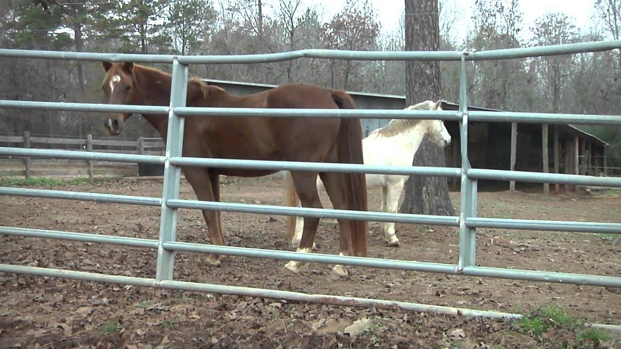 Georgia College Equestrian Team Youtube