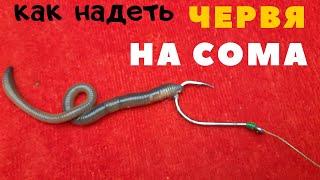 Как надевать червя выползка для ловли сома и крупной рыбы