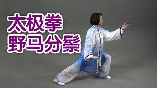 太极拳野马分鬃如何练习? 太极拳教学Tai Chi Lesson: Wild Horse Shakes Its Mane