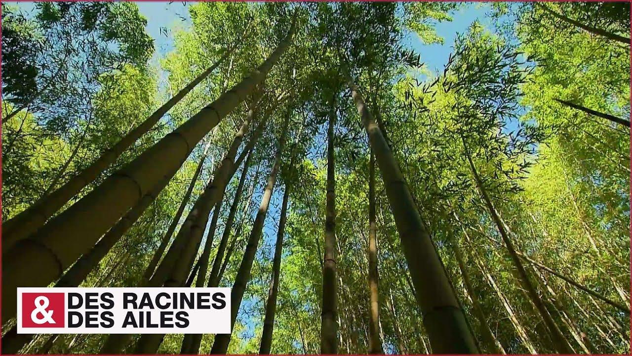 La bambouseraie d 39 anduze unique en europe youtube - La bambouseraie a anduze ...
