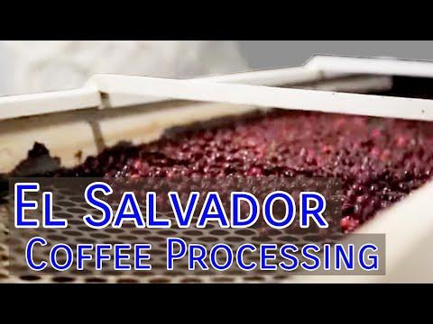 Coffee Processing in El Salvador