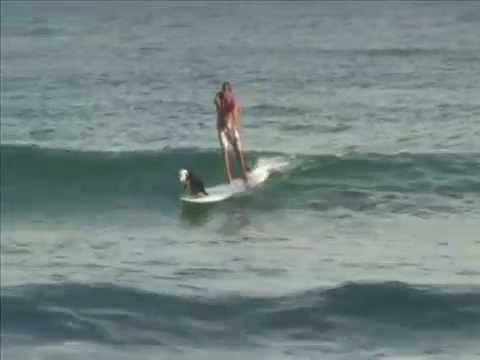 Lani Surfing Dog Part 2 - Natural Balance Dog with Chris de Aboitiz