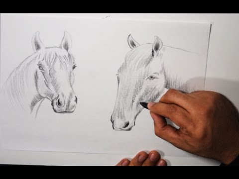 Dibujos a Lapiz de Animales ( Boceto de Caballos ) - YouTube