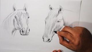 Dibujos a Lapiz de Animales ( Boceto de Caballos )