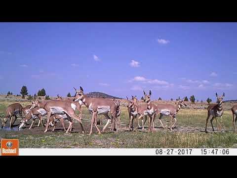 2017 Oregon High Desert Trail Camera Footage