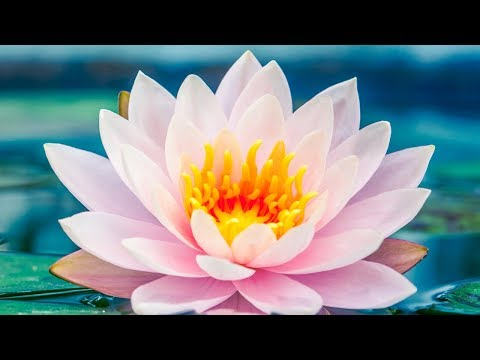 India - Inner Music For Peace & Relaxation   Traditional Indian Meditation Music