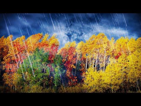 Sleep To Rain & Wind White Noise | 10 Hours