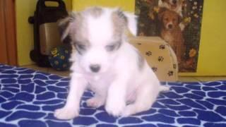 Mischlingshunde Welpen in Krombach