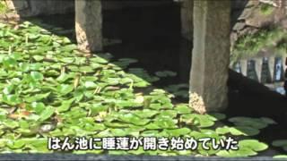 睡蓮in岡山藩泮地