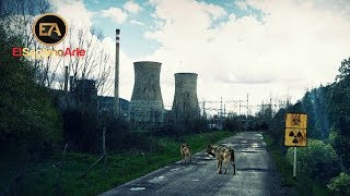 La Zona (Movistar) - Teaser