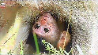 New Born crying/ Mum makes baby cry/ Adorable Animals monkey Youlike Monkey 951