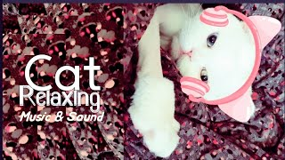 [빗소리] 고양이가 좋아하는 음악 | 수면에 좋은 소리| 장대빗소리|  Half music| sounds of rain| 빗소리asmr
