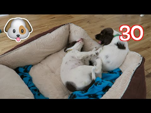 Vuly Day 30 | ADJUSTING TO PUPS!