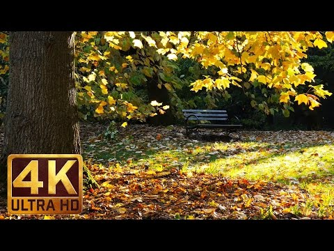 Washington Park Arboretum Autumn - 4K UHD Relaxation Video Relaxing Piano Music for Stress Relief