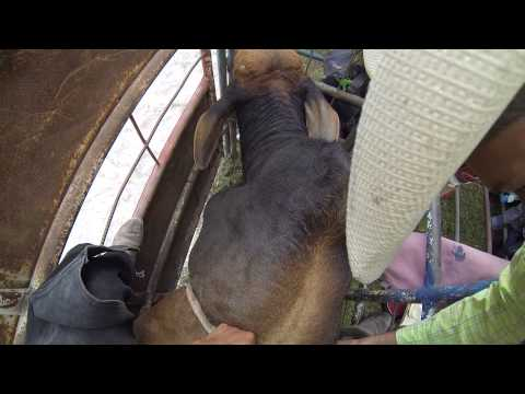 Santa Maria de Jesus, Guatemala--rodeo, bull riding, crowd, volcano! 3280 010315 danielphotocom