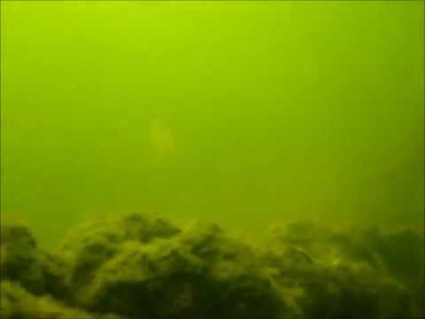 chasse sous marine au senegal (carpe noire)