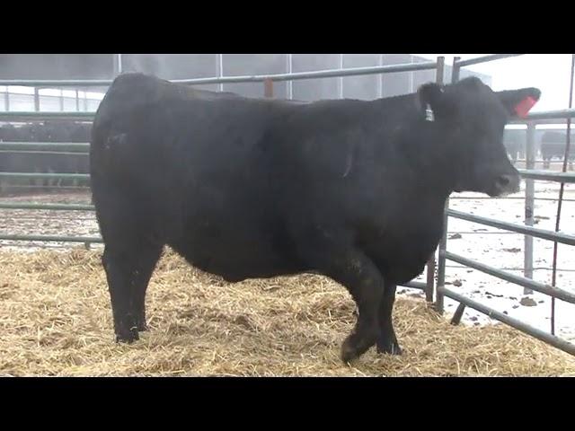 Schiefelbein Farms Lot 377