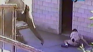 Нападение слона на человека