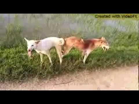 dog fucked