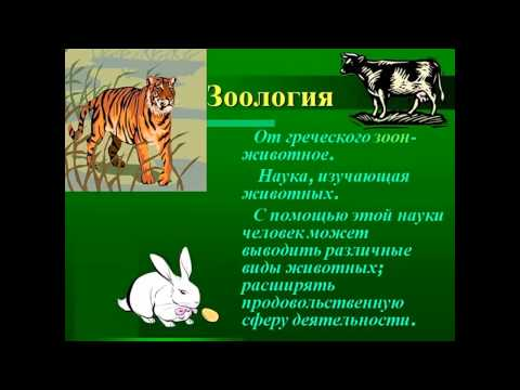 Презентация к уроку биологии по теме: Цепи питанияиз YouTube · Длительность: 5 мин9 с  · Просмотры: более 3000 · отправлено: 08/11/2015 · кем отправлено: Olga Ostapishina
