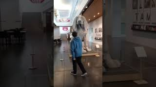 Leroy, the big pup. Tacoma art museum