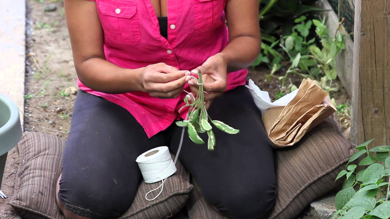 Discussion on this topic: 5 Ways to Dry Sage, 5-ways-to-dry-sage/
