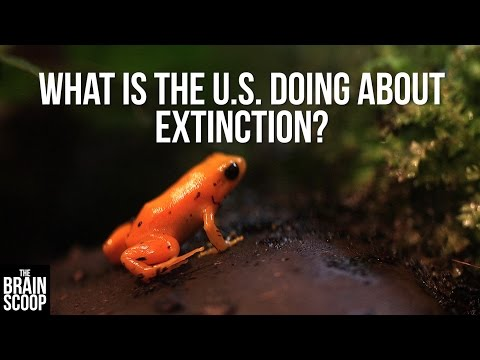 What Is The U.S. Doing About Extinction?