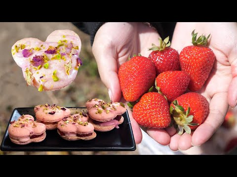 How to Make Mickey Macarons From Freshly Picked Strawberries & Raspberries   Farm to Table