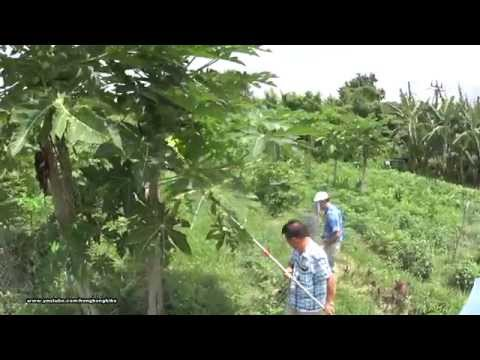 Hong Kong Organic Farms Trip 有機農莊遊 (2)