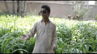 Download Zamunga malangi da oh da kuklo badshahi da Raees Bacha New Song MP3 song and Music Video
