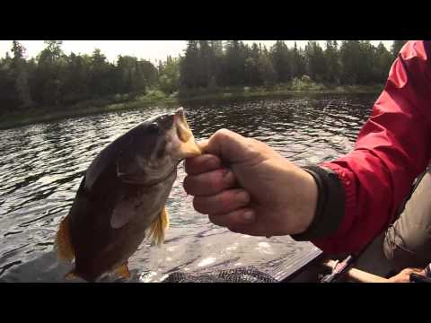 Northern Ontario River Canoe Trip- Missinaibi River (Peterbell to Mattice) Part 2