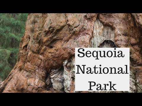 Landscape Photography in Sequoia National Park | Overcoming Challenges in Photography
