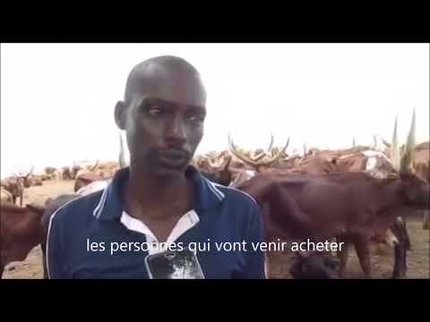 Affaire eleveur des vaches Rwandais au Bandudu en RD Congo - La solution du President Joseph Kabila