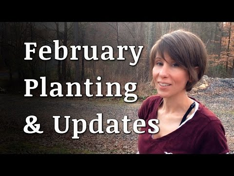 February Planting and Updates