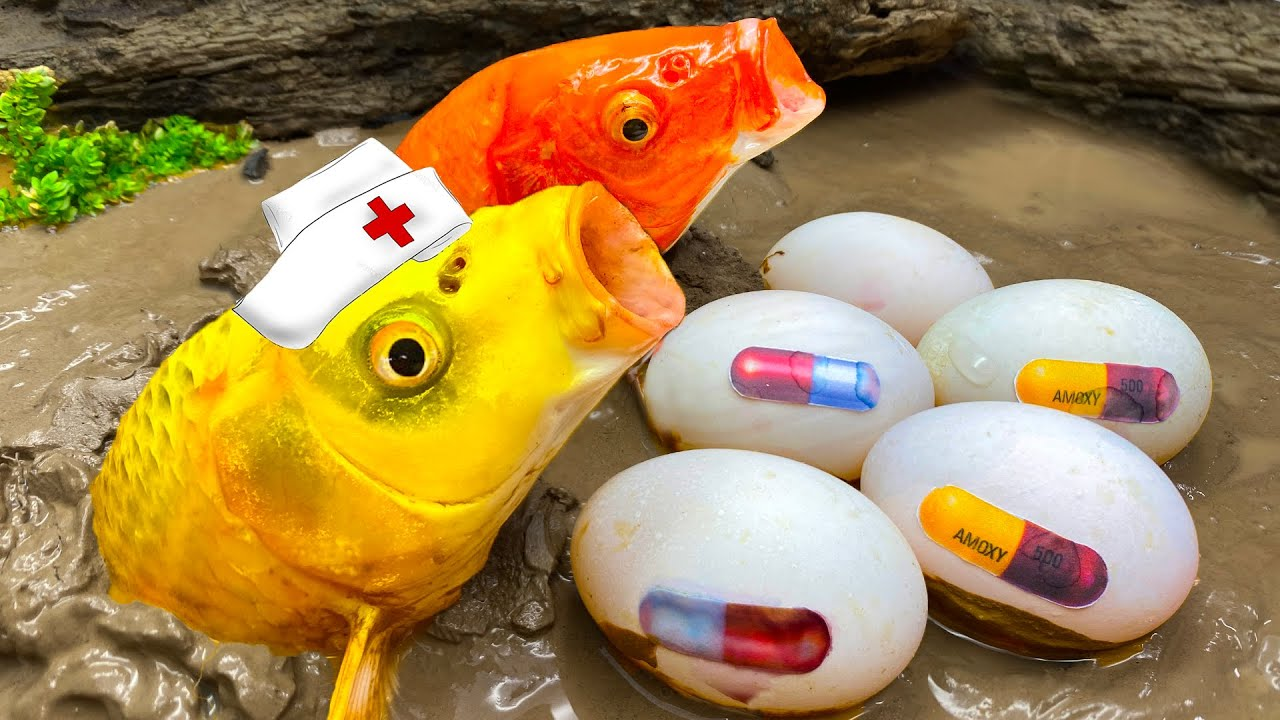 Stop Motion ASMR - Doctor Fish Rescue Koi, Pink Eel catch Eggs Colorful Cooking Primitive Experiment
