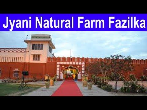 Jyani Natural Farm / Village Kathera, / District Fazilka Punjab / Bio Farming / Zero Budget Farming