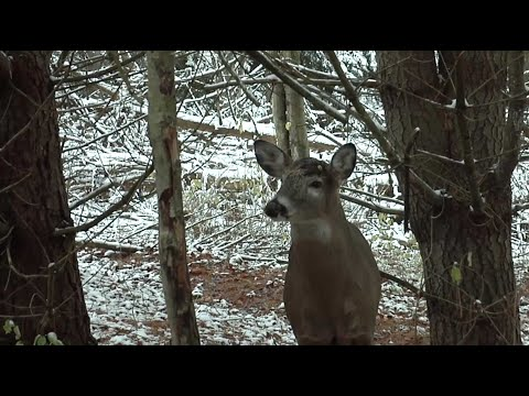 Here's Why Meat Hunting Family Traditions Endure - Destination Whitetail, Full Episode