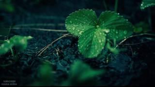 Suara Hujan Dan Petir - Untuk Terapi Tidur Dan Relax