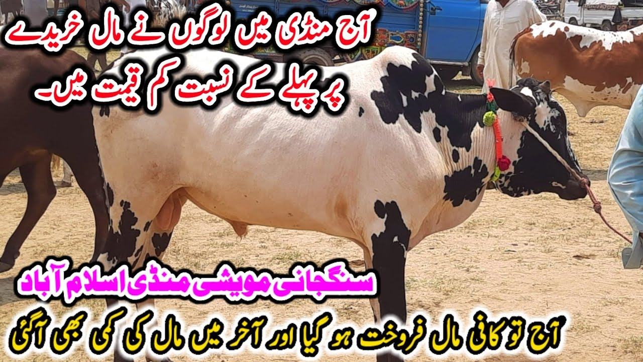 Sangjani Mandi Islamabad 2021|| Qurbani Janwar Latest Rates Update || Pk Mandi || 20-07-2021
