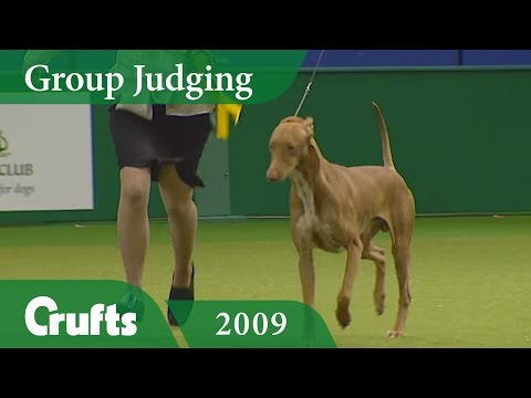 Pharaoh Hound wins Hound Group Judging at Crufts 2009 | Crufts Classics