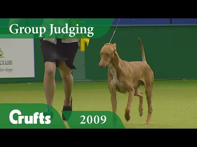 Pharaoh Hound wins Hound Group Judging at Crufts 2009 | Crufts Classics