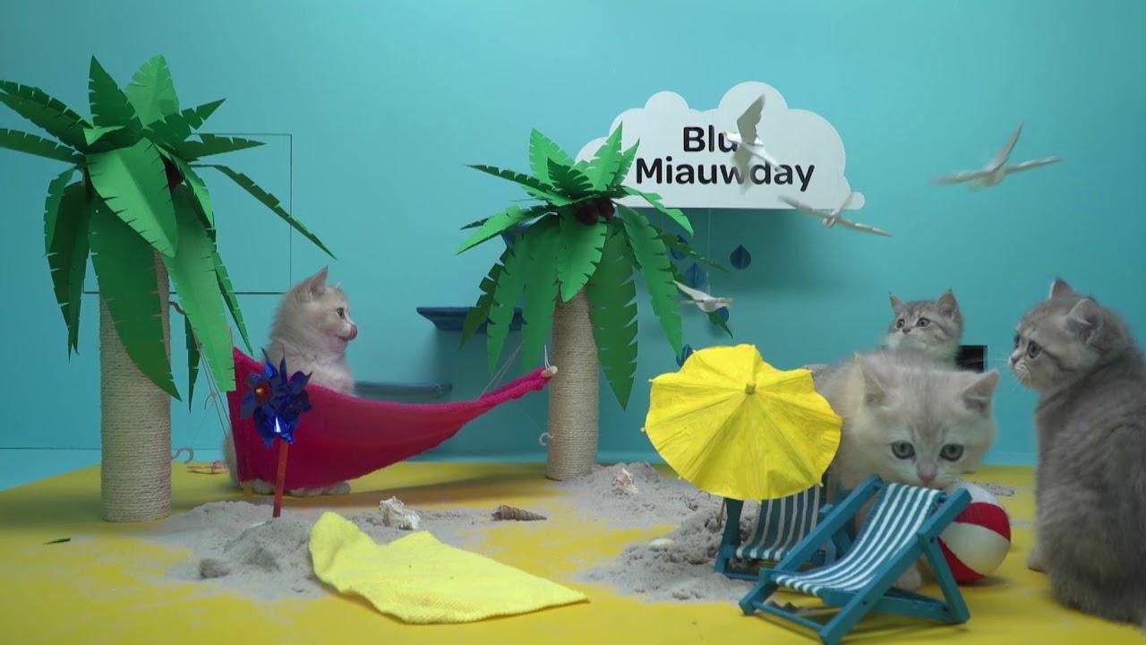 blue meowday by telenet youtube