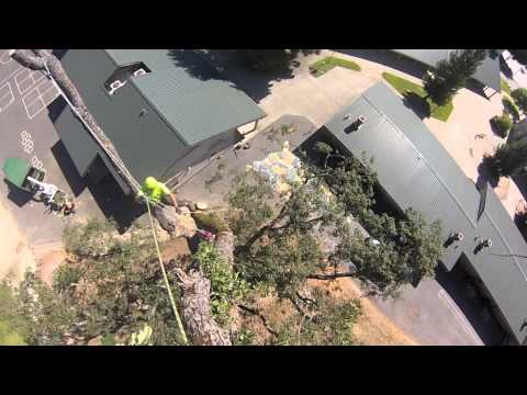 Tree Removal Sierra Hills Elementary School in Meadow Vista