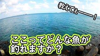 【沖縄県南部】情報なし!謎なポイント!ここって何がいるの?
