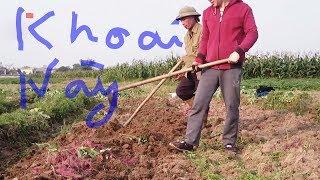 Trải nghiệm nửa ngày bới khoai lang 2. Những hình ảnh chân thực nhất của người nông dân Việt Nam