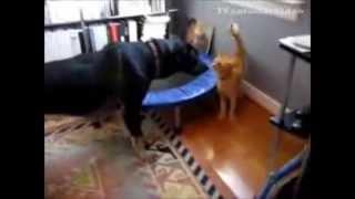 Кошки дерутся с собаками