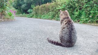 ひたすら犬の帰りを待っている猫 Cat waiting for dog's return thumbnail
