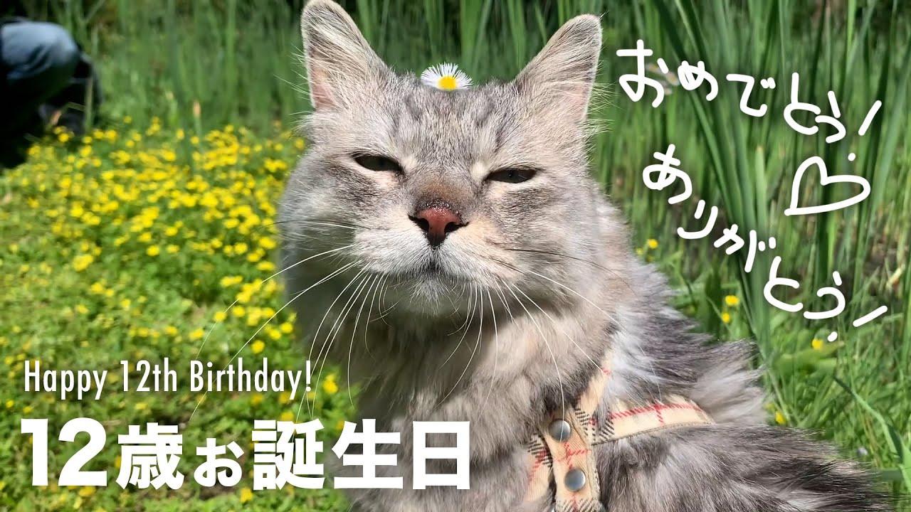 猫12歳お誕生日 ありがとう!感謝 / CAT HAL Happy 12th birthday! Thank you