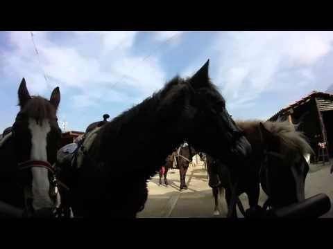 Horse Riding Tour, Naples, Italy I